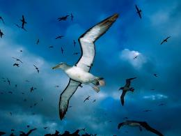 Wallpapers Birds Wallpapers HD Desktop Backgrounds, Images, seagull 1466