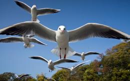 Seagull HD Wallpapers 467