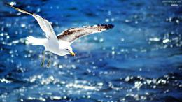 Seagull HD Wallpapers 737