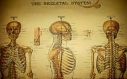 skeleton anatomy medical HD Wallpaper of Desktop Background 989