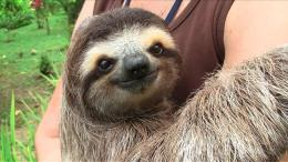 Sloth Wallpapers high resolution 1663