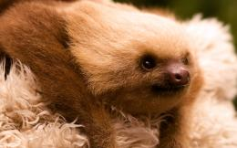 Displaying 17Images ForBaby Sloth Wallpaper 940