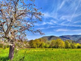 Spring landscape Desktop wallpapers 1024x768 123