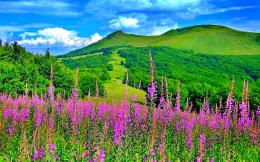Dream Spring 2012 Spring Landscape Hd Wallpaper 2560×1600 Wallpaper 477