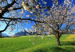 Spring Landscape Wallpaper 4 1783