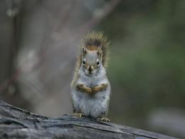 Squirrel Wallpaper 1021