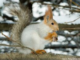 White Squirrel having excellent hair style 180