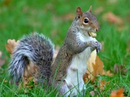 Mac Desktop Wallpapers HD Eastern Gray Squirrel Happy Tree Squirrel 1876