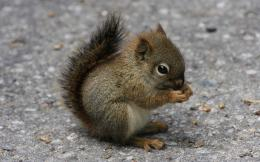 Little Squirrel Wallpapers Pictures Photos Images 1601