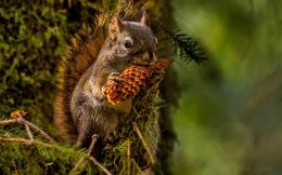cute squirrel eating wallpaper tags eating animals cute squirrels 1465