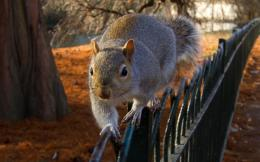 Squirrel Balance Beautiful animal wallpaper High Definition Wallpapers 1986