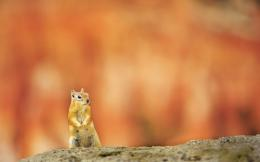 Squirrel Wide Desktop Background HD wallpapers 449