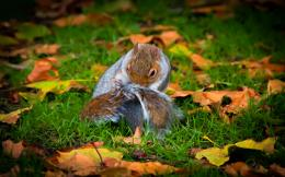 Squirrel Wallpaper 1170