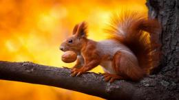 Tagged with: Animal HD HD Wallpapers Squirrel Wallpapers 643
