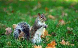 Squirrel Desktop Wallpaper Images 1951