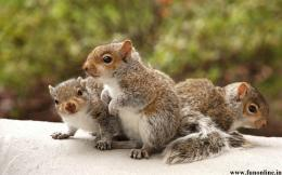 Cute Baby Squirrels Desktop Wallpaper 1043