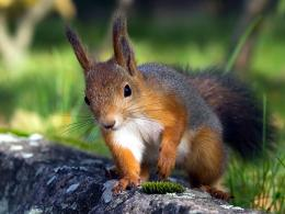 Squirrel Wallpaper Photos Wallpaper with 1024x768 Resolution 836