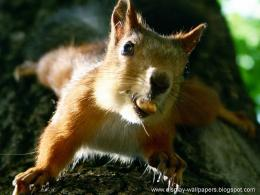 Squirrels Latest Desktop Wallpapers 698