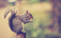 Squirrel Desktop Backgrounds 2560x1600 1597