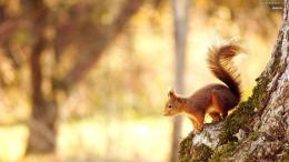 Desktop Wallpaper,Animals,Squirrel,HD Wallpapers,Widescreen Wallpapers 1023
