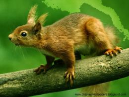 Squirrels Latest Desktop Wallpapers 1542
