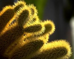 1280x1024 Cactus in sunlight desktop PC and Mac wallpaper 1413