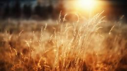 Dried Plants and Shining Sunlight HD Nature Wallpaper 1829