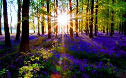 Forest Sun Rays Wallpaper 540x337 Forest Sun Rays Wallpaper 1473