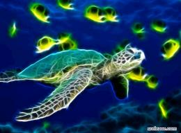 desktop wallpaper sea turtle animated wallpaper sea turtle wallpaper 477