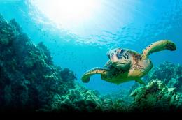 Turtle Desktop Wallpaper 1380