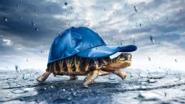 Turtle Funny Wallpaper and make this wallpaper for your desktop 241