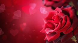 Wallpaper: Valentines Day Desktop Wallpaper 442