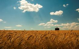 summer wheat field gold spikes sky clouds landscapes grass wallpaper 968