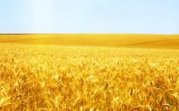 wheat field landscape desktop picture download wheat field wallpaper 1036