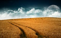 Wheat Field With Sky WallpaperDownload and use this free wallpaper 171