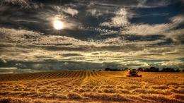 Wheat Field Wallpapers 764