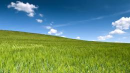 Green wheat field 1920x1080 wallpaper download page 801612 771