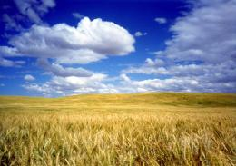summer wheat field hd wallpaper download wheat field images 1824