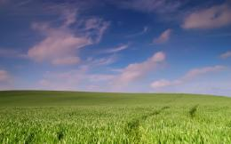Spring Wheat Field Wallpaper 529