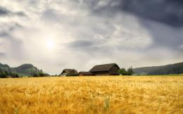 Wheat Field wallpaper 696