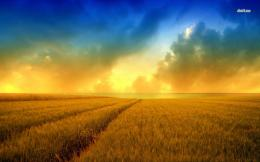 Wheat field wallpaper 747