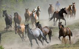 Herd of wild horses, animals, herd, horses 1440x900 1766