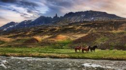1366x768 Wild Horses desktop PC and Mac wallpaper 926