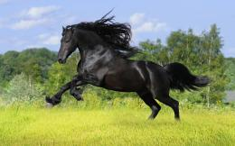 horse wallpaper fantasy horse wallpaper horse desktop wallpaper horse 229