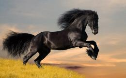 Wild Horses Desktop Wallpaper, Wild Horses Pictures | Cool Wallpapers 1595