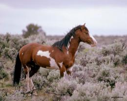 Download Wild Horse Free Desktop Background # 2 Full Size 715