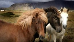 wild horses wallpapers 1860