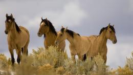 wild horses wallpapers 1329