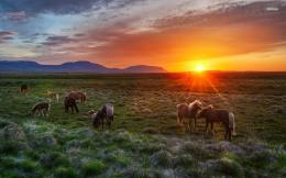 Wild horses in the sunset wallpaper 1403