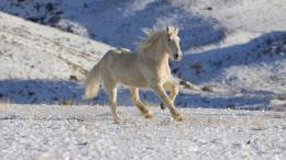 wild horses running wallpaper beautiful white wild horses running 1891